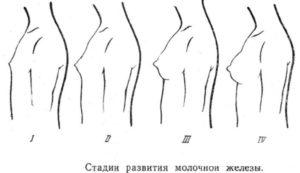 Рост молочных желез