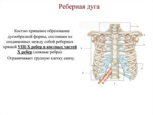 Болит край реберной дуги слева X-XII ребра