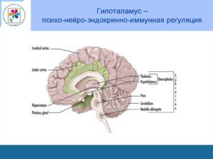 Иммунная карта нейро