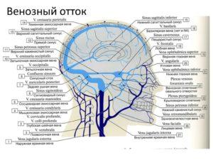 Венозный отток затруднен от мозга