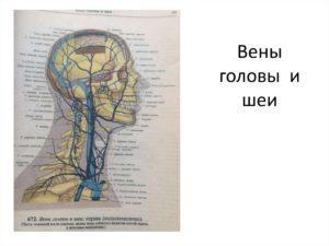 Вены головы и шеи отклонения