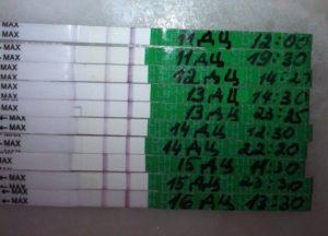 Тест на овуляцию положительный в течении 3 дней