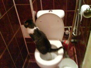 Часто хожу в туалет по большому
