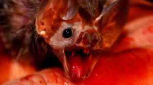 Укус летучей мыши