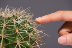 Укололась кактусом