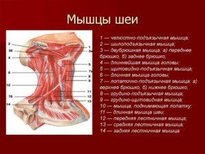 Напряжение в подъязычной мышце
