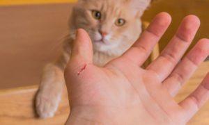 Поцарапала кошка
