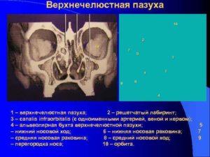 Образование в альвеолярный бухте