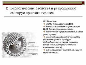 Вирус герпеса и цитомегаловирус