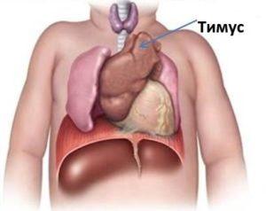 Увеличен тимус у грудничка