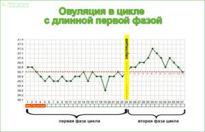 Длинный цикл 42 дня и овуляция