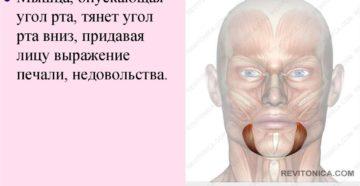 Тянет мышцы лица вниз