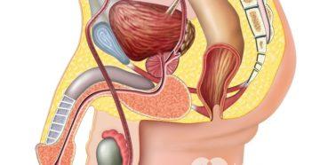 Что колят под яички при лечении простатита