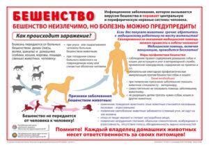 Можно ли заразиться бешенством от домашней привитой собаки
