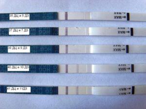 Задержка месячных 15 дней, признаки беременности, тест отрицательный