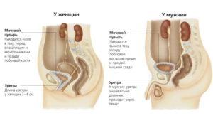 Постоянный дискомфорт в уретре, анализы в норме, боль над лобковой костью