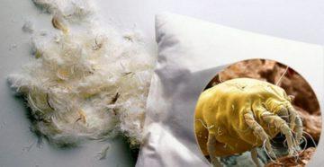 Аллергия на перьевую подушку