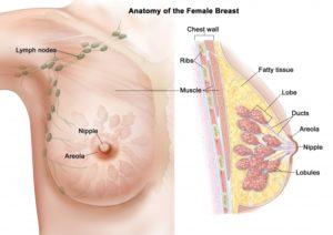 Болит грудь в области ареол сосков